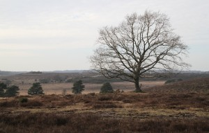 New Forest near Lyndhurst.